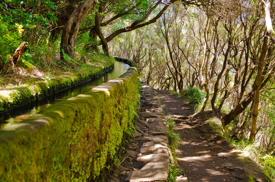 Levada in Madeira