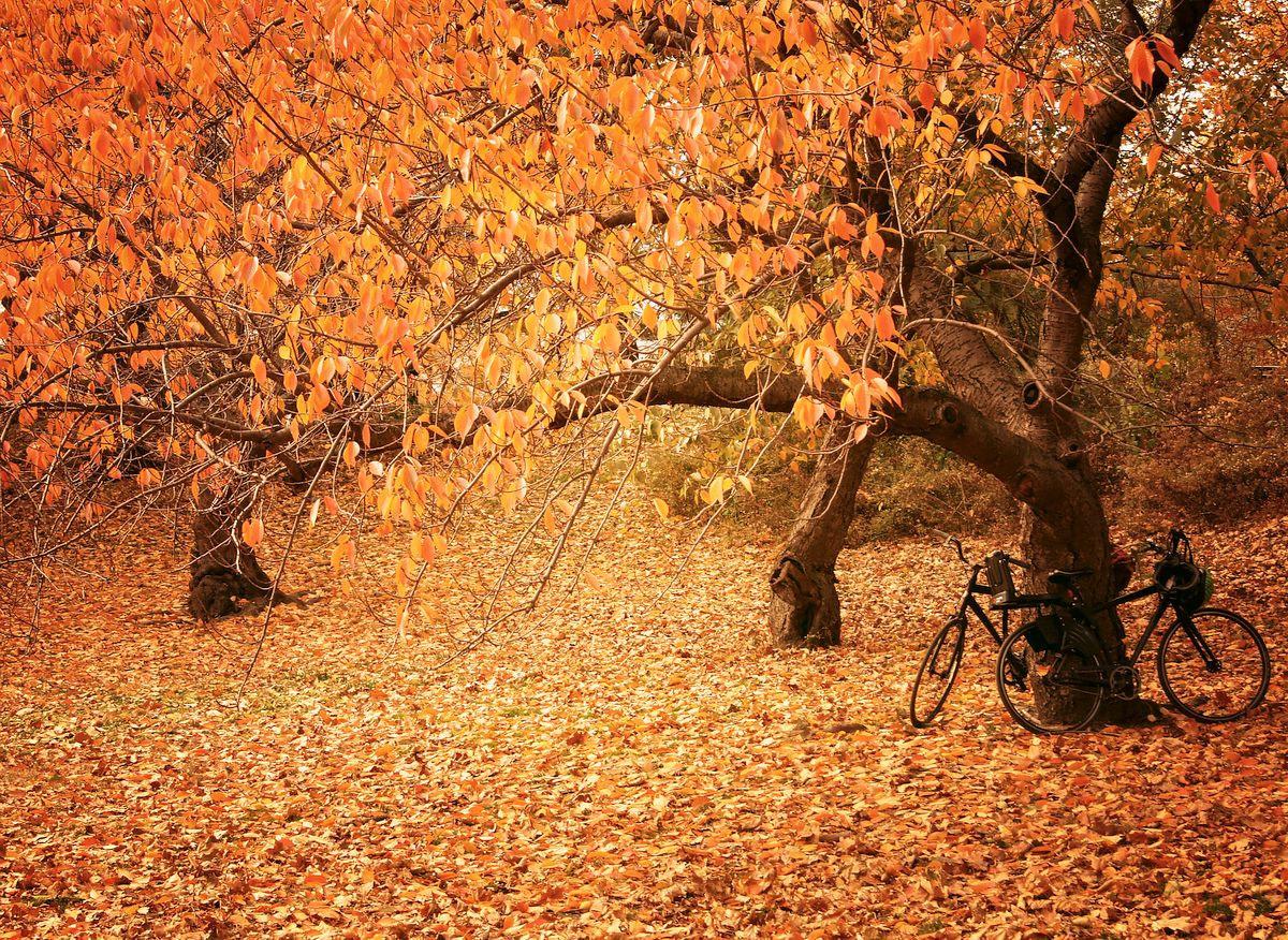 Autumn Foliage in NYC