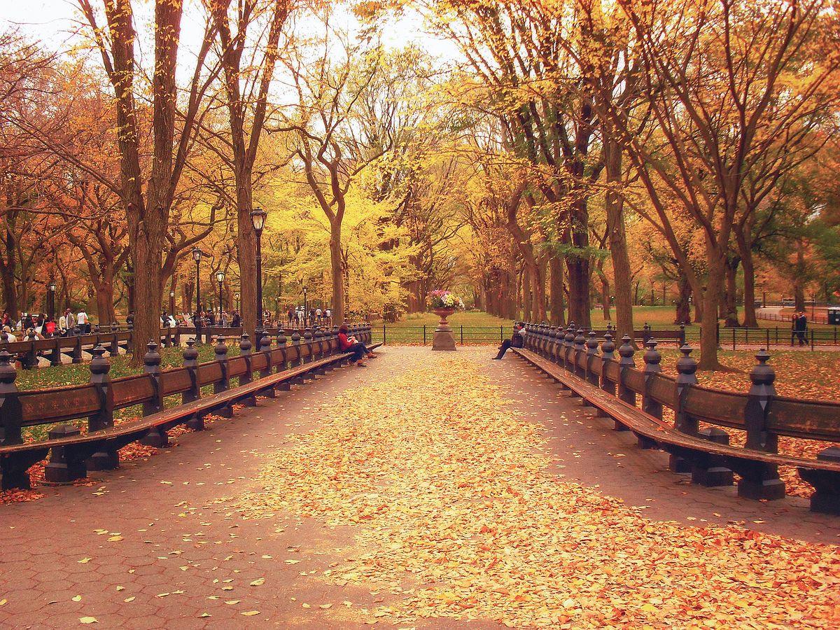 Carpet of Leaves in Central Park