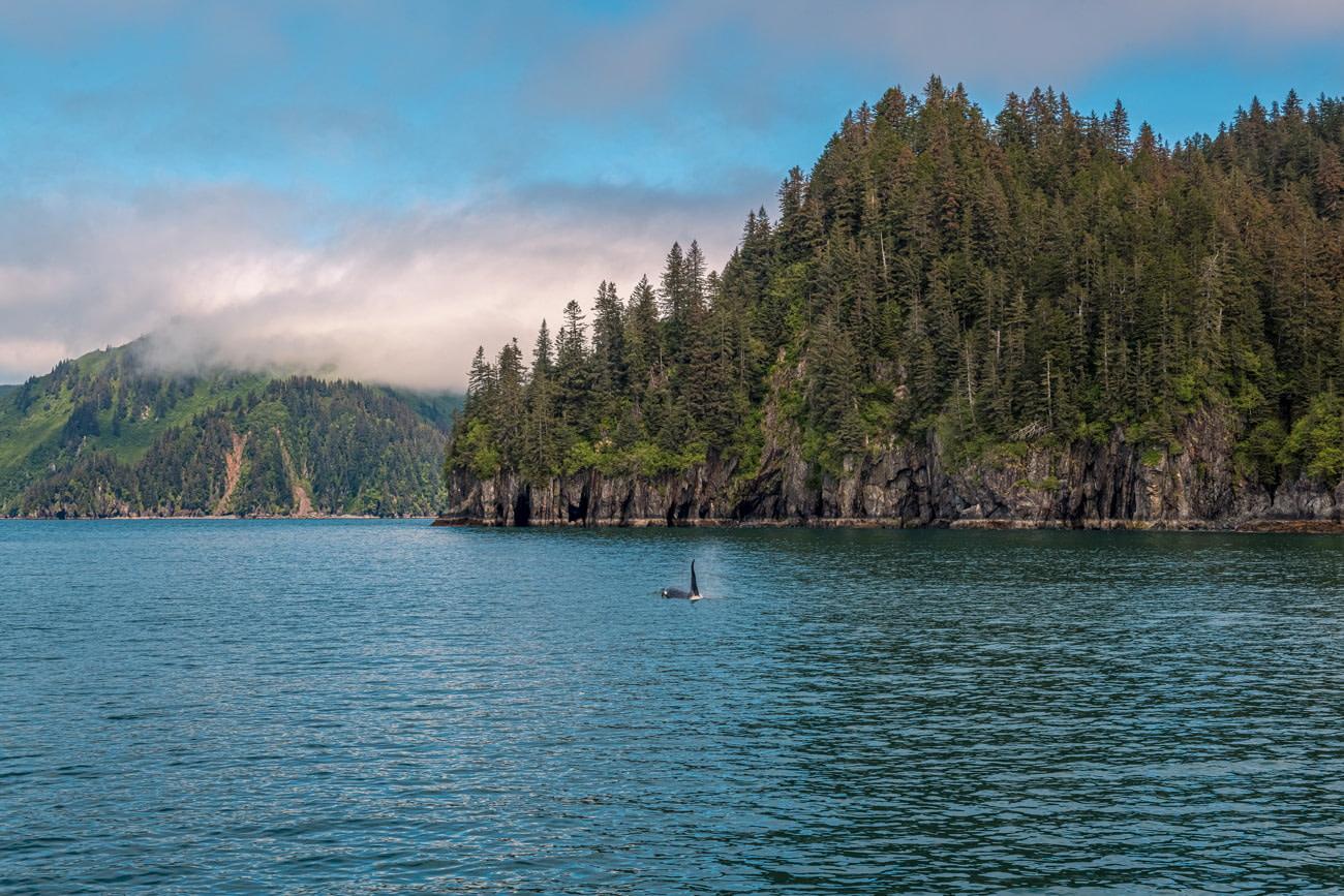 Kenai Fjords National Park, Alaska